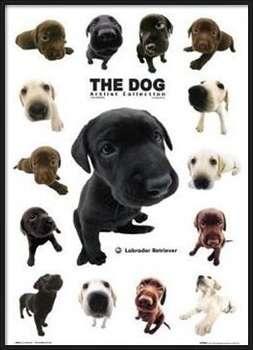 The dog Uokvirjen plakat