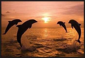 Delfíny Uokvirjen plakat