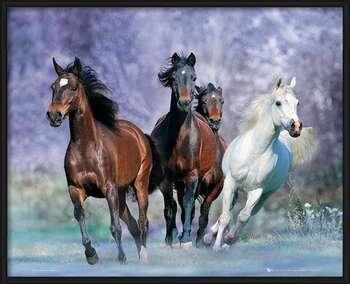 Running Horses - Bob Langrish Uokvirjen plakat