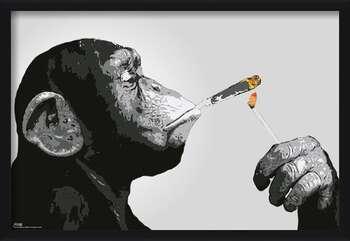 Uokvirjen plakat Steez - Monkey Smoking